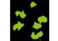 Création de logo et d'identité visuelle à Orléans